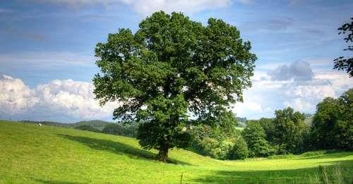 पेड़ों के नाम -